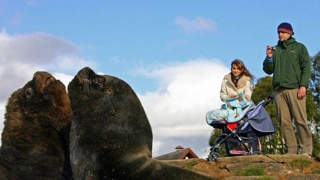 Un par de turistas admiran unos lobos marinos en Valdivia.