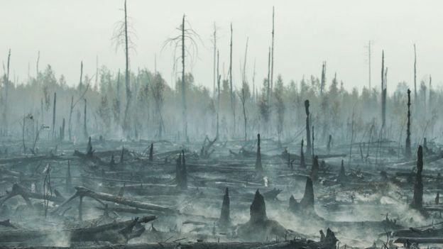 Последствия лесного пожара в Рязанской области