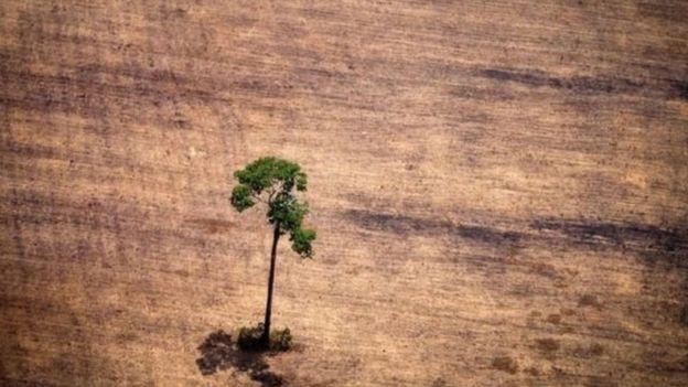 Árvore em meio a pasto