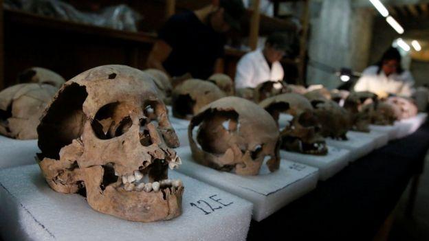 Los cráneos que han sido extraídos para llevarlos a analizar en un laboratorio.
