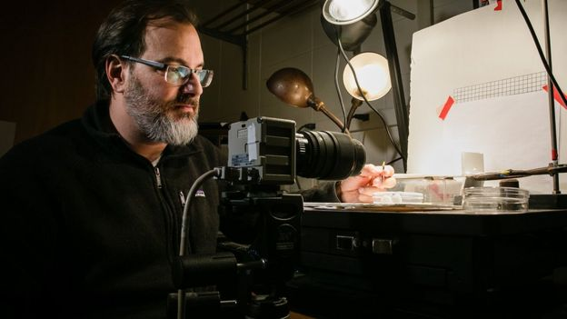 Professor de entomologia e biologia animal Andrew Suarez, que estudou a formiga drácula
