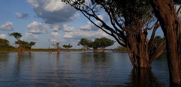 Árvores submersas na região da usina de Balbina