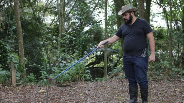 Manejo da serpente com ganho e medição no tubo de contenção