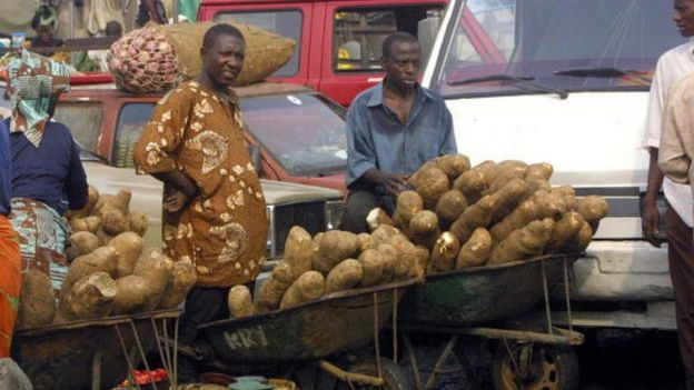 Men wey dey use wheelbarrow sell yam