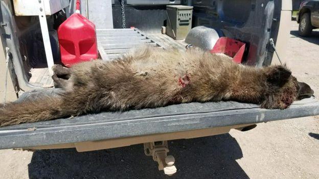 Imagem mostra animal que especialistas tentam identificar