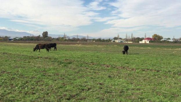 Xanqərvənd kəndi