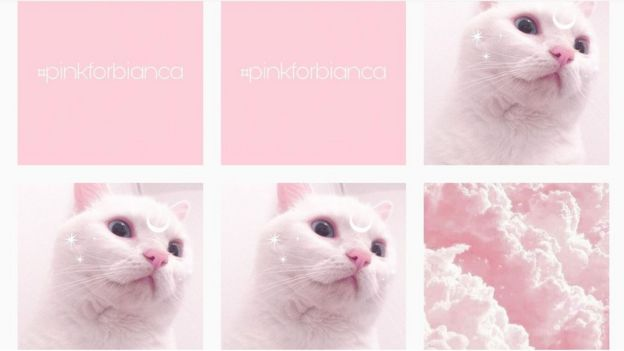 Photographs of cats and #pinkforbianca