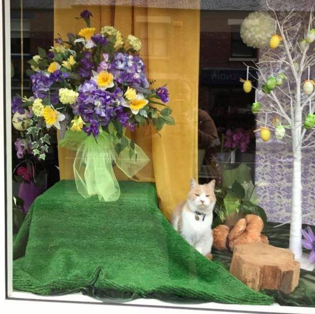 Уилбур в витрине цветочного магазина