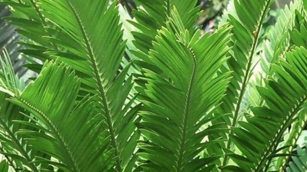 گیاهان از طریق ترکیباتی که از ریشه آنها و یا رایحهای که از برگهایشان متصاعد میشود میتوانند ارتباط برقرار کنند