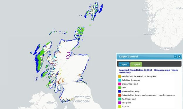 Why is there a row over seaweed harvesting in Scotland? - BBC News