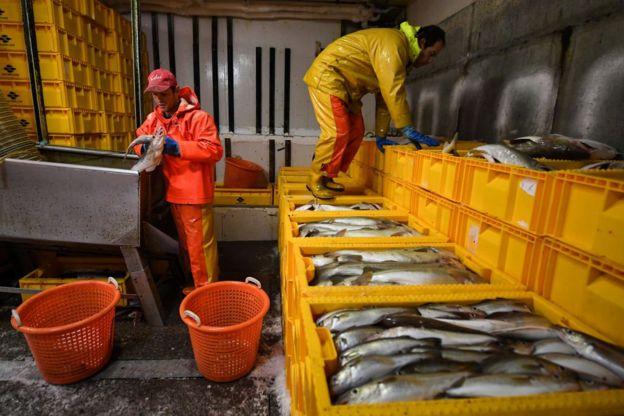 Dos hombres en labores con pescados