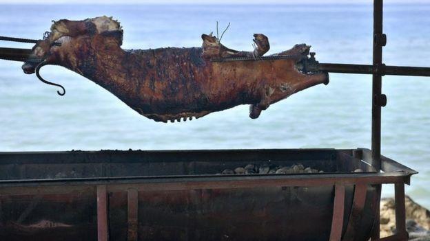 Cerdo en púa
