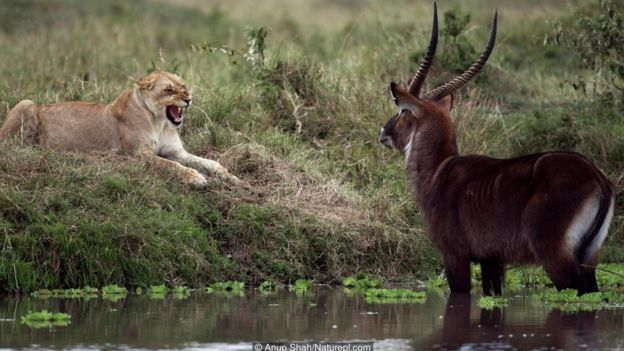 Các con vật trong đời sống tự nhiên biết cảm thấy sợ hãi trước những kẻ ăn thịt mình