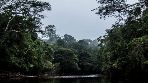 Rio na região de Maturacá