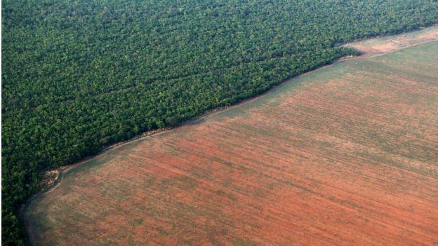 Plantação ao lado de área de floresta amazônica no Mato Grosso