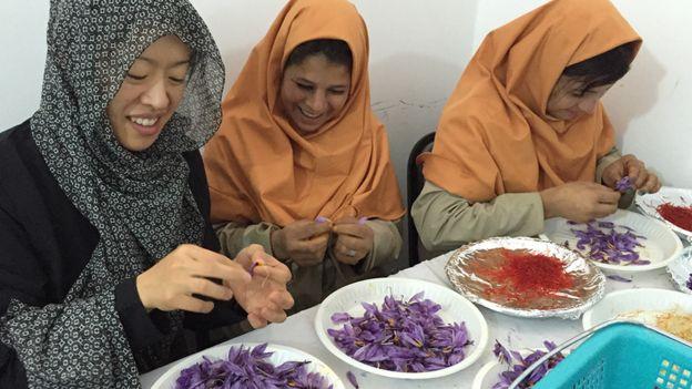 Mulheres extraindo fios de açafrão de flores