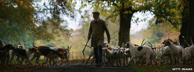 Huntsman Andrew German of The Cheshire Forest Hunt exercises his hounds in the autumnal countryside in preparation for the start of the new hunting season