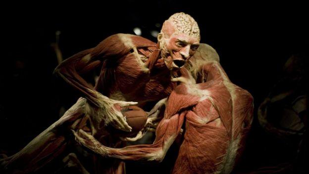 Muñecos de plastilina mostrando los músculos del cuerpo humano.