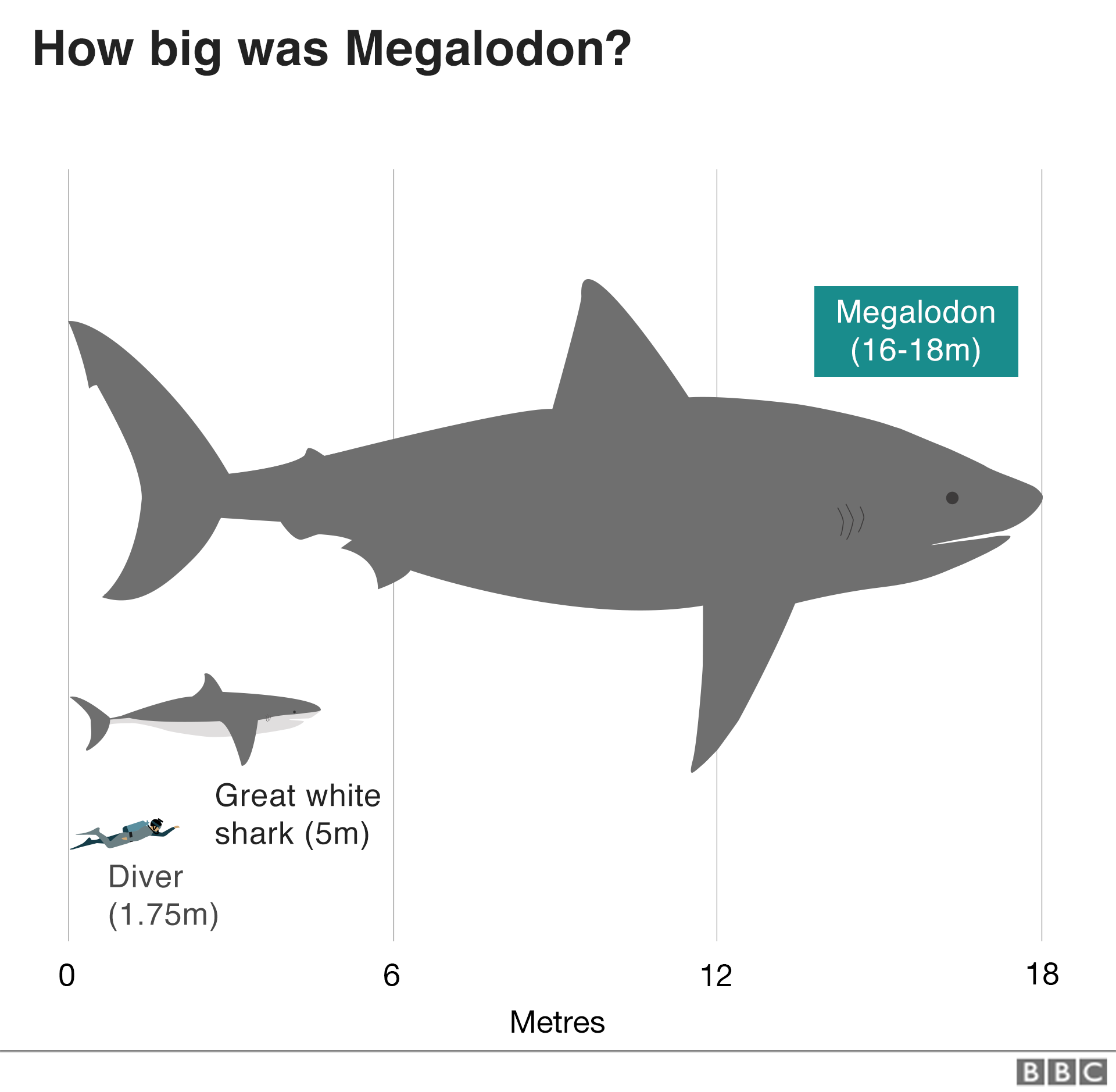 The Meg: the myth, the legend (the science) - BBC News