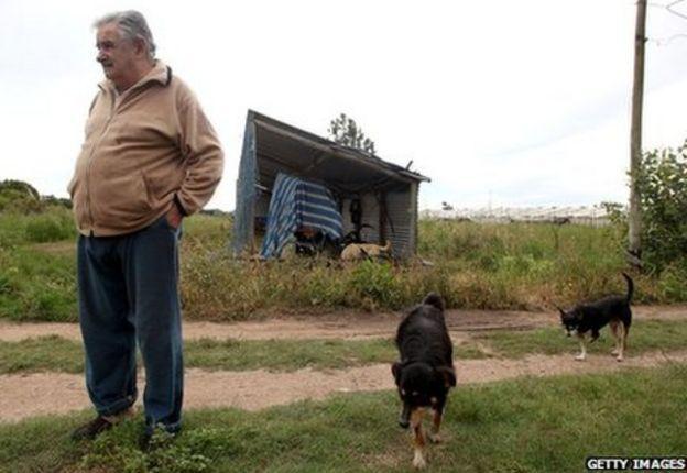 Мухика и его собаки