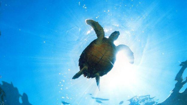 Tortuga marina en Seychelles.