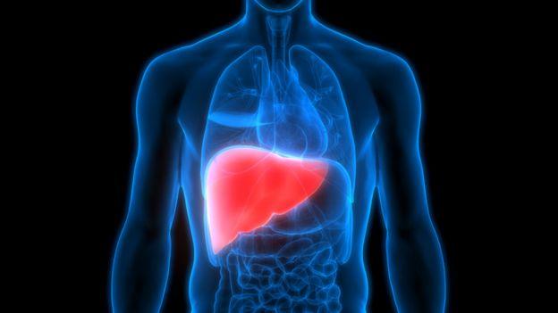 El hígado humano