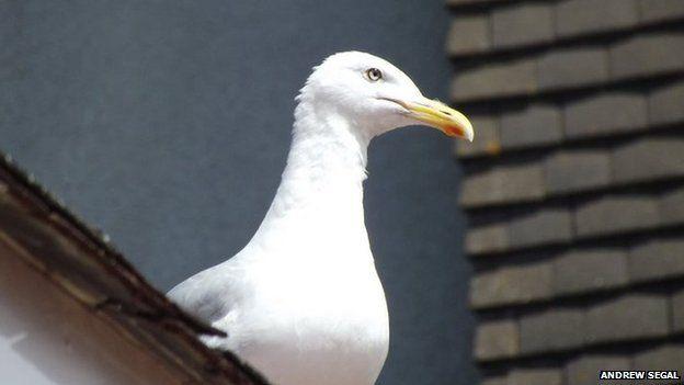 Gull. Pic: Andrew Segal
