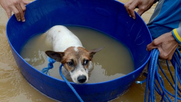Tim relawan mengevakuasi seekor anjing yang terjebak banjir di Perumahan Bung Permai, Makassar, Sulawesi Selatan, Rabu (23/1/2019). Ketinggian banjir di kawasan tersebut mencapai satu meter akibat meluapnya Sungai Tello.
