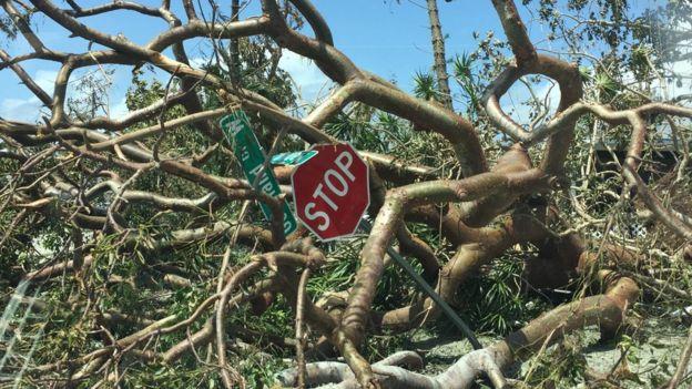 Carteles enredados en las ramas de un árbol.