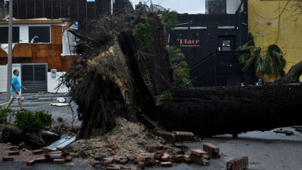 Árbol caído por cuenta del paso del huracán Michael
