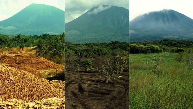 Montagem de fotos feita por Janzen e Hallwachs mostra recuperação da Reserva Guanacaste