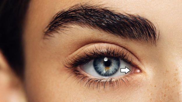 Третье веко - это свернутая ткань во внутреннем углу глаза