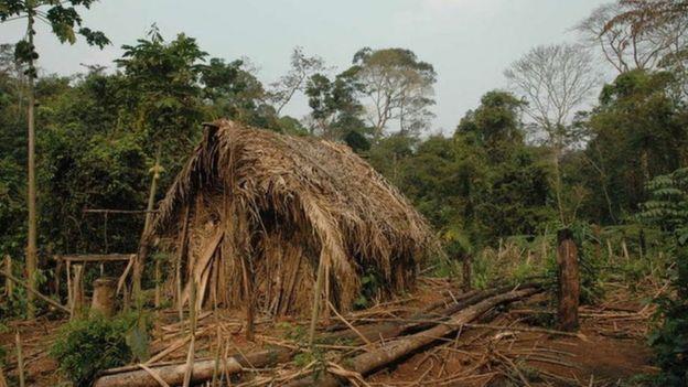 """Uma cabana de palha chamada de """"macolca"""", que o índio do buraco construiu e depois abandonou"""