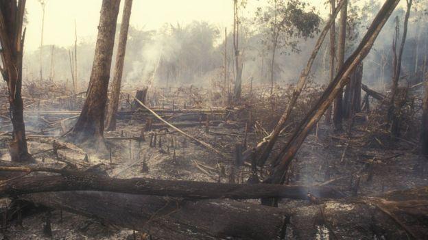 Restos de un bosque quemado