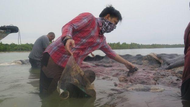 Hombre sacando artículos de plástico del estómago de la ballena.