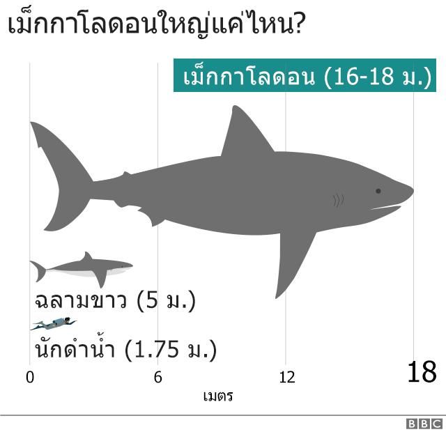 แผนภาพแสดงขนาดฉลามเม็กกาโลดอน