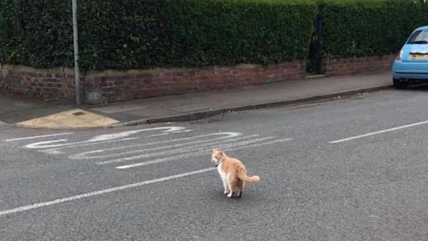 Уилбур переходит дорогу в деревне Раддингтоне