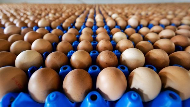 A view of eggs at a poultry farm in Putten, the Netherlands, 01 August 2017
