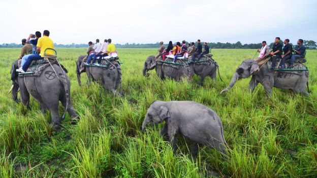 Para proteger rinocerontes, parque florestal na Índia atira em pessoas