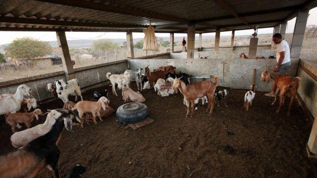 A ONG Amigos da Onça construiu 18 currais para criadores da região do Boqueirão da Onça