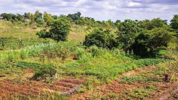 """""""السماد المعجزة"""" الذي سيغير مستقبل الزراعة في أفريقيا"""