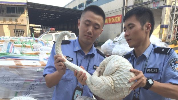 Officers sort smuggled skinless pangolin bodies seized by customs in Jiangmen, Guangdong Province of China