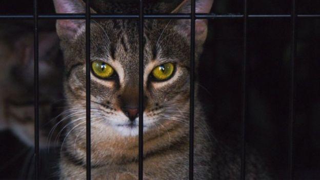 被關在籠裏的貓