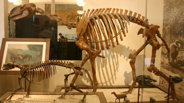 Esqueleto de Macrauchenia.