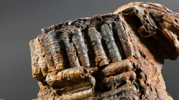 New evidence reveals Goodwin Sands shipwreck's secrets - BBC