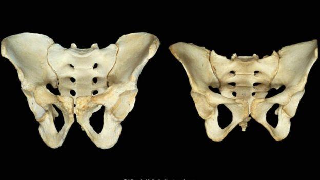 leğen kemikleri