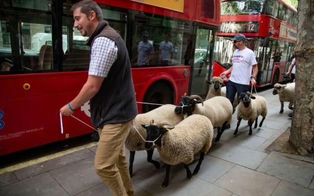 el polémico plan por puntos del gobierno británico para los inmigrantes que quieran trabajar en Reino Unido 5