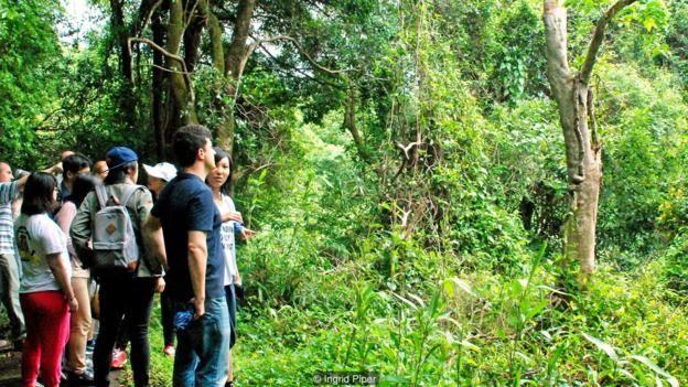 Cây trầm từ đó gỗ trầm hương được thu hoạch là mục tiêu của việc ăn trộm.