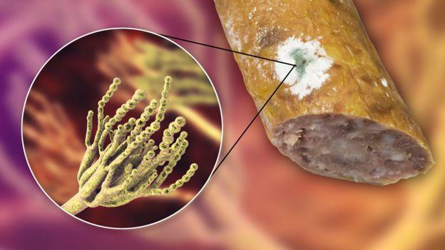 Hongo del género Penicillum en una salchicha