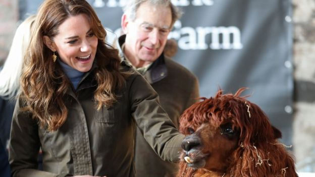 Duchess of Cambridge with an alpaca on her visit to farm